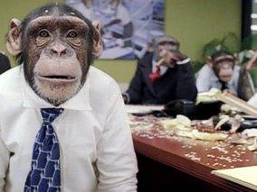 career-chimp-2